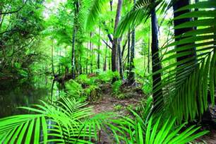 Tropical Climbing Plants - exclusive half day rainforest and waterfall 4wd adventure cairns mprning afternoon