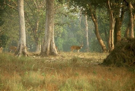 La Faune Resorts Kanha India Asia by Parco Nazionale Di Kanha