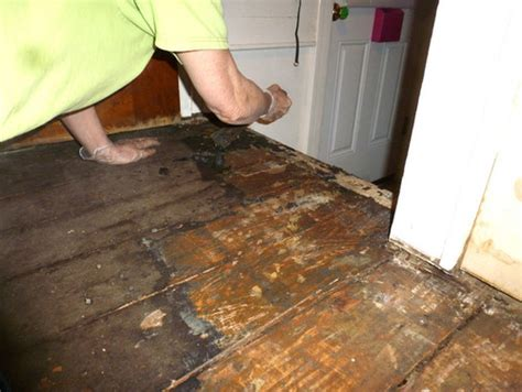 Removing Glue From Wood Floor by How To Remove 1930 S Linoleum Glue From 1900 S Wood Floors