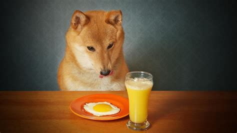 are eggs for dogs 11 human foods that you can feed your pup