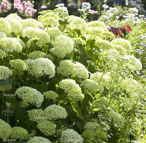 Planter En Juin by Que Planter Au Mois De Juin
