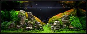 planted aquarium inspiration for a fresh year imod