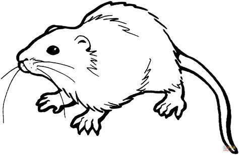 Rat Coloring Page brown rat coloring page free printable coloring pages