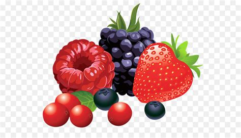 frutta clipart berry fruit clip forest fruits png vector clipart