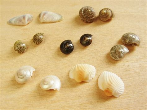 Sea Shell Vase Seashell Earrings How Did You Make This Luxe Diy