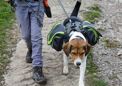 backpack for dogs to wear the best backpack more than just an accessory