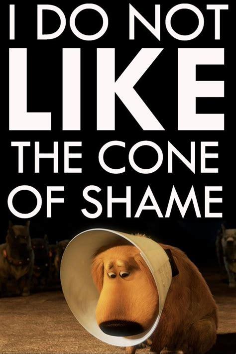 Cone Of Shame Meme - someone shot my inlaws dog footballguys free for all