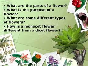 understanding flower anatomy ppt download