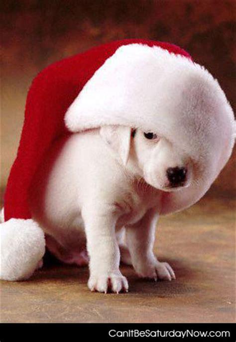 santa puppies can it be saturday now santa