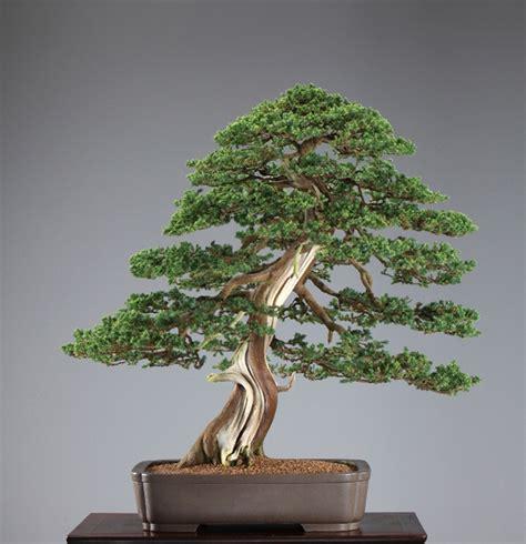 here s a thought bonsai naka dave de groot the principles of bonsai design bonsai bark