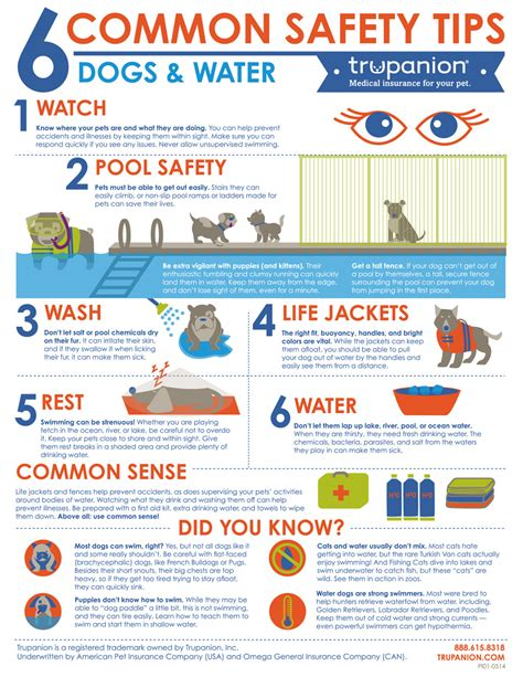 infographic 5 home safety tips when on a vacation summer pet safety series swimming giveaway