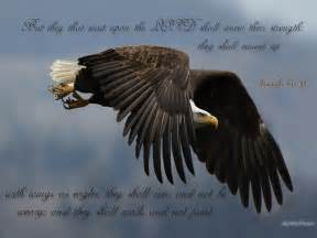 Meaning of eagles in the bible insights i have learned from the