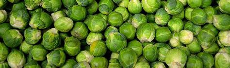 can dogs eat applesauce can dogs eat brussel sprouts facts