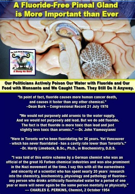 Pineal Gland Detox Side Effects by The 25 Best Pineal Gland Ideas On Decalcify