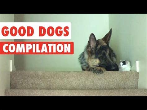 puppy compilation compilation funnydog tv