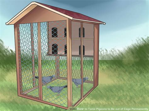 Open Loft House Plans How To Tame Pigeons To Be Out Of Cage Permanently With