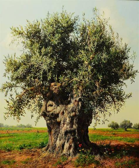 scendi dal piedistallo baby olive tree by albanian born artist elidon hoxha