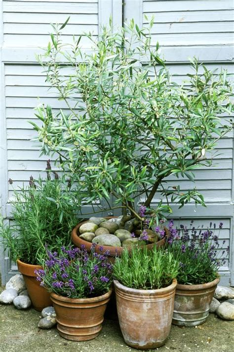 amazing mediterranean garden design ideas