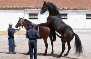 t pfern zu hause pferd decken ihre inspiration zu hause