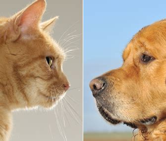 cats vs dogs dogs vs cats which pet is better for you