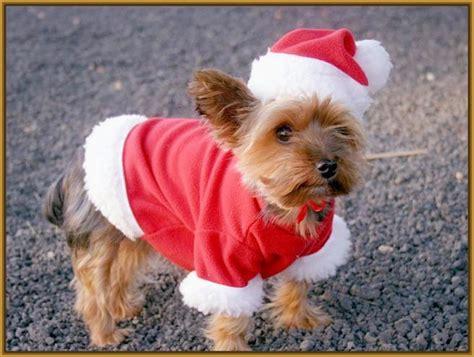 imagenes animales navidad hermosas imagenes de perritos tiernos de navidad