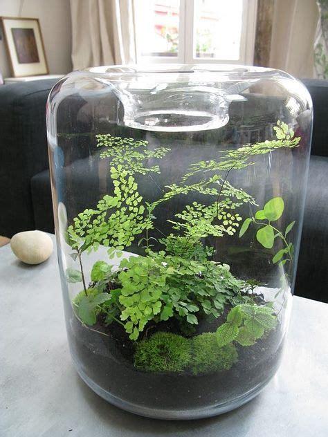 17 best ideas about terrarium on pinterest diy terrarium