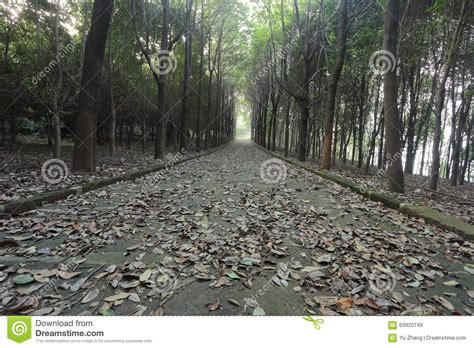 road in forest stock photo image of darkness mist silent road covered with leaves in the forest in