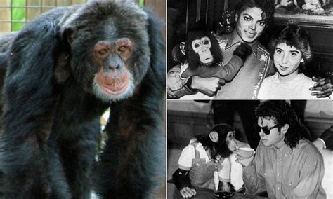Mj Monkey Set by Bubbles Surfaces In Florida Michael Jackson S Pet Chimp