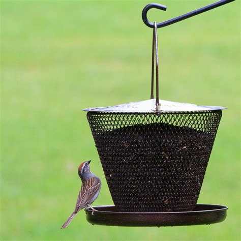 amazon com no no bronze tray bird feeder bzud00326