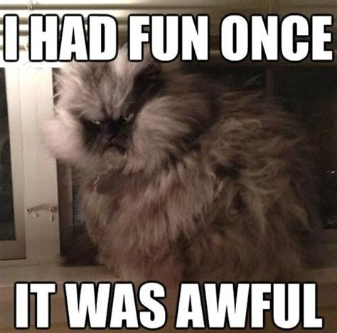 Colonel Meow Memes - quot i had fun once it was awful quot colonel meow know your meme