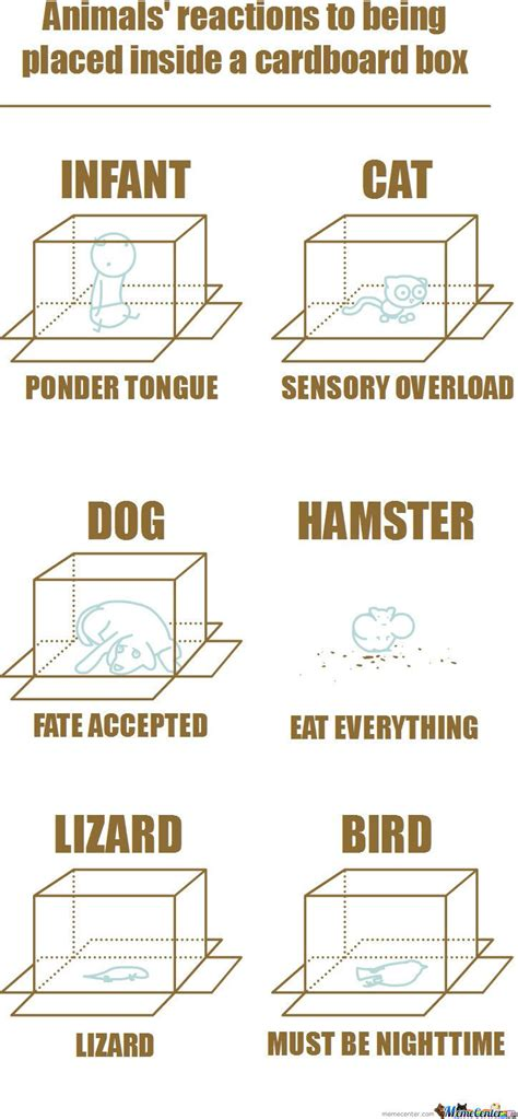 Cardboard Box Meme - animal s reactions to being placed inside a cardboard box