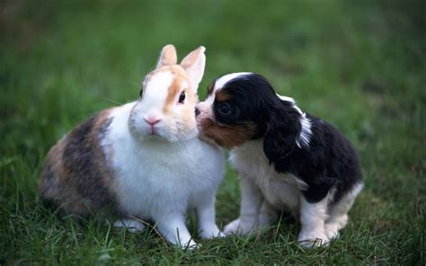 puppies and bunnies teddybear64 images puppy and rabbit hd wallpaper and background photos 20056202