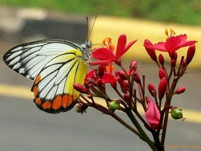 membuat puisi kupu kupu kupu kupu kita aja