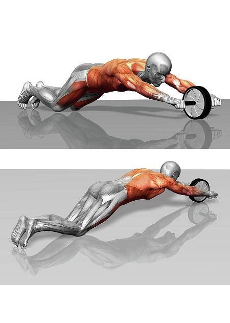 Alat Fitness Ab Doer Pelangsing Perut ab whell bodyscuplture toko alat fitness