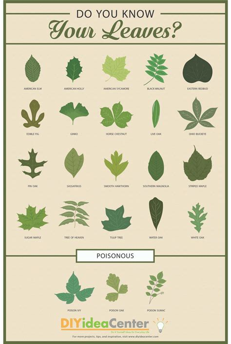 Decorating Dining Room Ideas leaf identification guide diyideacenter com