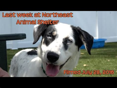 northeast animal shelter dogs last week at northeast animal shelter adorable cats and wonderful dogs filmed july