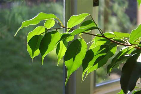 raumluft befeuchten gesunde luft diese zimmerpflanzen entgiften und