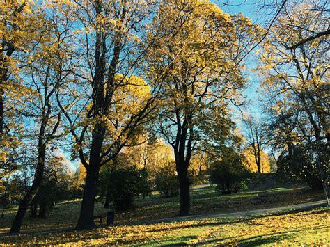 define tree autumn leaf landscape fall nature plant free images