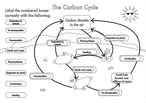 gcse carbon cycle a4 poster to label by beckystoke