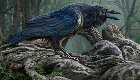 raven wallpaper abyss raven wallpaper and background image 1600x924 id 564886