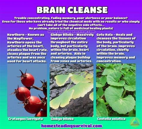 Brain Detox Cleanse by 17 Best Images About Herbal Remedies Homesteading