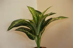 indoor plants no sun indoor plants no sun related keywords indoor plants no