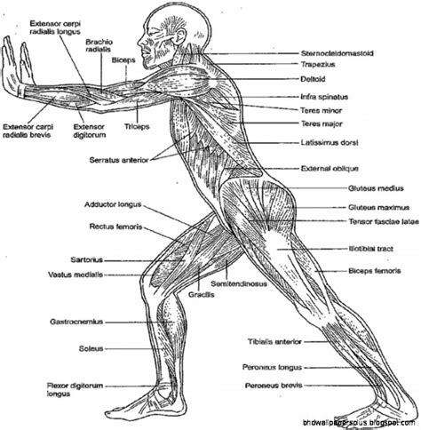 free anatomy and physiology coloring pages coloring home
