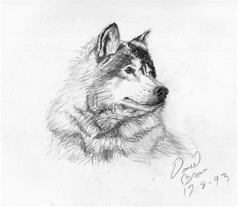 Sketches And Drawings by Drawing Sketches Of Animals Pencil Drawing
