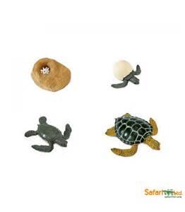 imagenes de ciclo de vida de la tortuga ciclo de vida de la tortuga de mar montessori para todos