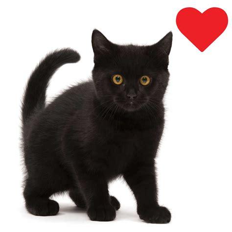 Black Cat catit black cat wall catit