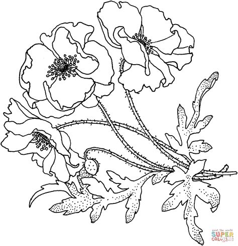 poppies flower coloring page free printable coloring pages