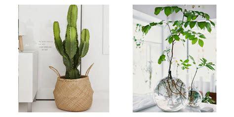 Pot Design Pour Plante Interieur by Pot Pour Plante D Int 233 Rieur L Atelier Des Fleurs