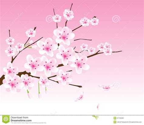 new year blossom tree vector vector cherry blossom branch royalty free stock