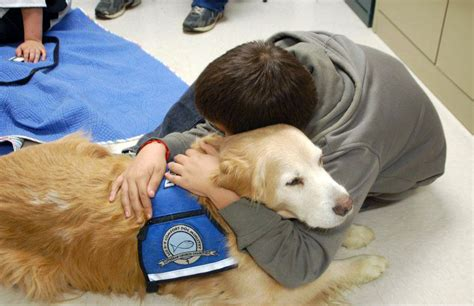 canine comforts therapy dogs gallery